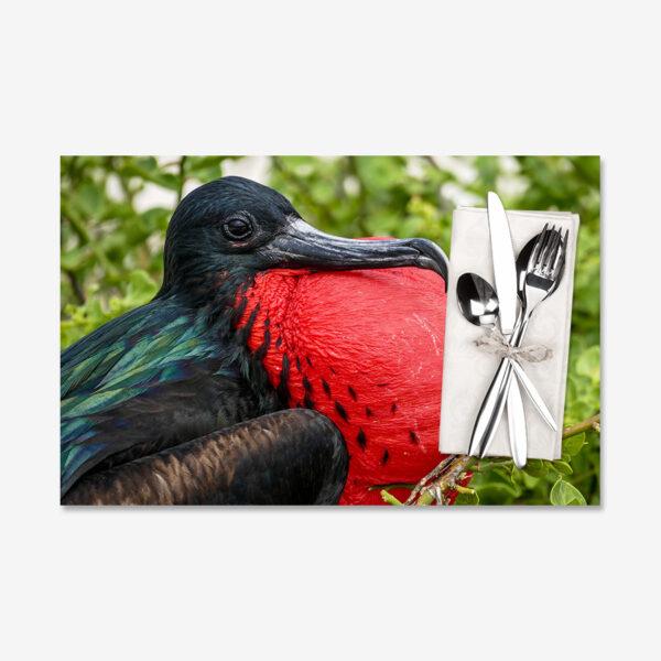 Frigate Bird, Galápagos Islands