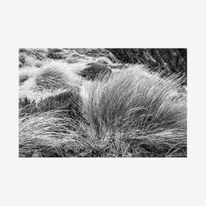 Black & White Grass, Tanzania