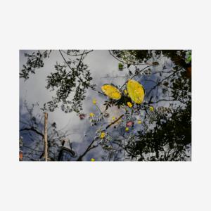 Trail Reflection, Big Cypress National Preserve, Florida