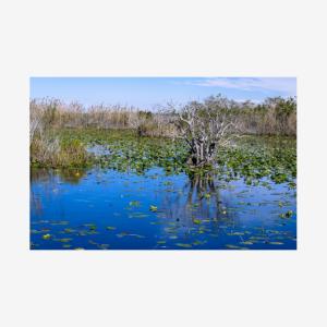 Landscape, Big Cypress National Preserve, Florida