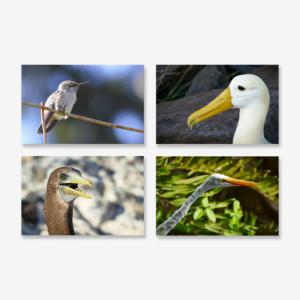 What the Beak